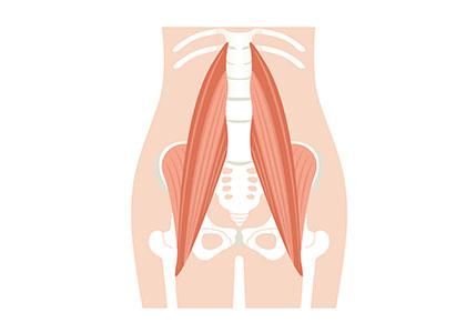 ⾻盤・股関節周辺の⾻と筋⾁。股関節を