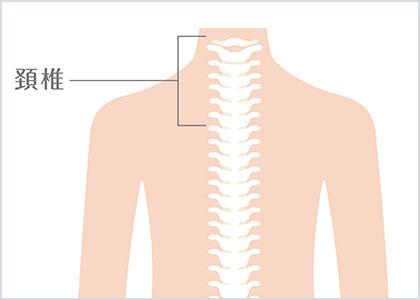 部位イラスト:頚椎