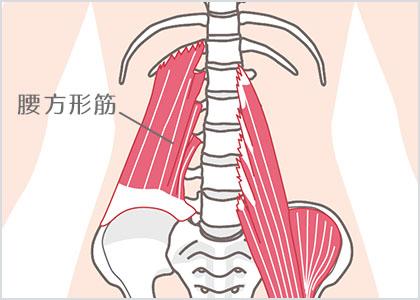 腰⽅形筋3